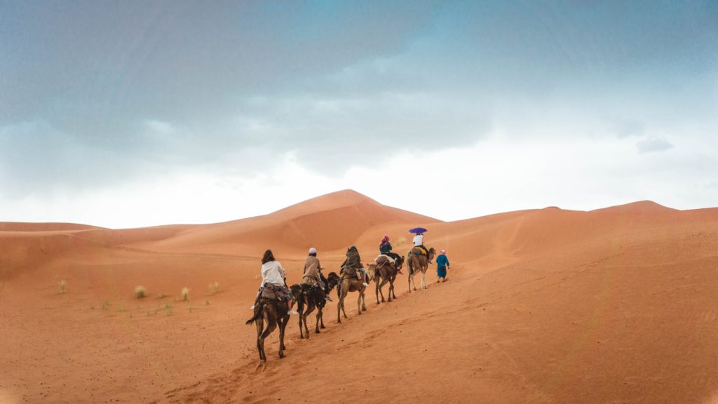Group traveling on camel in the desert
