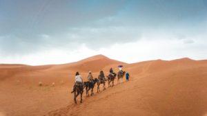 Group traveling on camel in the desert